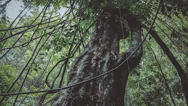 Một Đà Lạt khác thường: Tour vượt thác 6 levels không dành cho người yếu tim, khám phá thiên nhiên hùng vĩ - Ảnh 29.