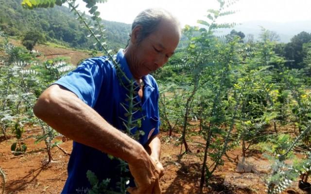 Nông dân Đà Lạt hốt bạc nhờ trồng cây đô la - Ảnh 3.
