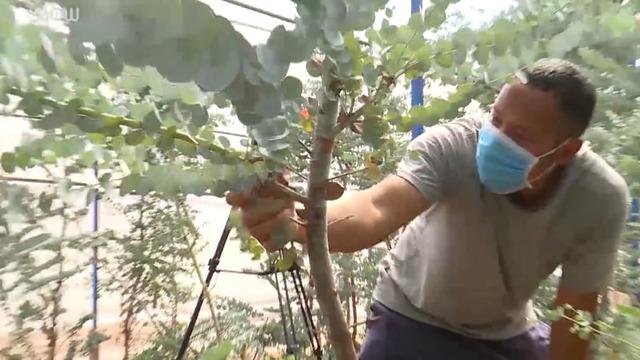 Nông dân Đà Lạt hốt bạc nhờ trồng cây đô la - Ảnh 4.