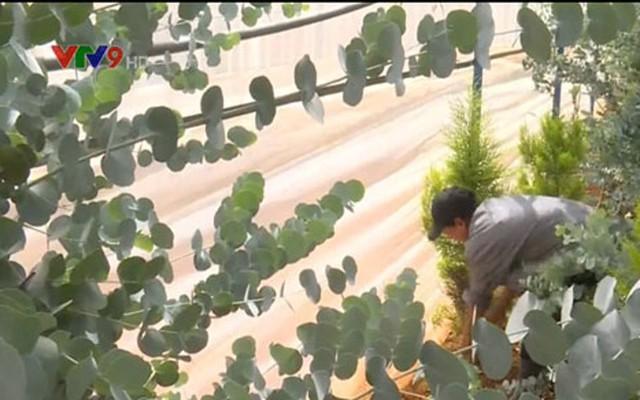 Nông dân Đà Lạt hốt bạc nhờ trồng cây đô la - Ảnh 5.