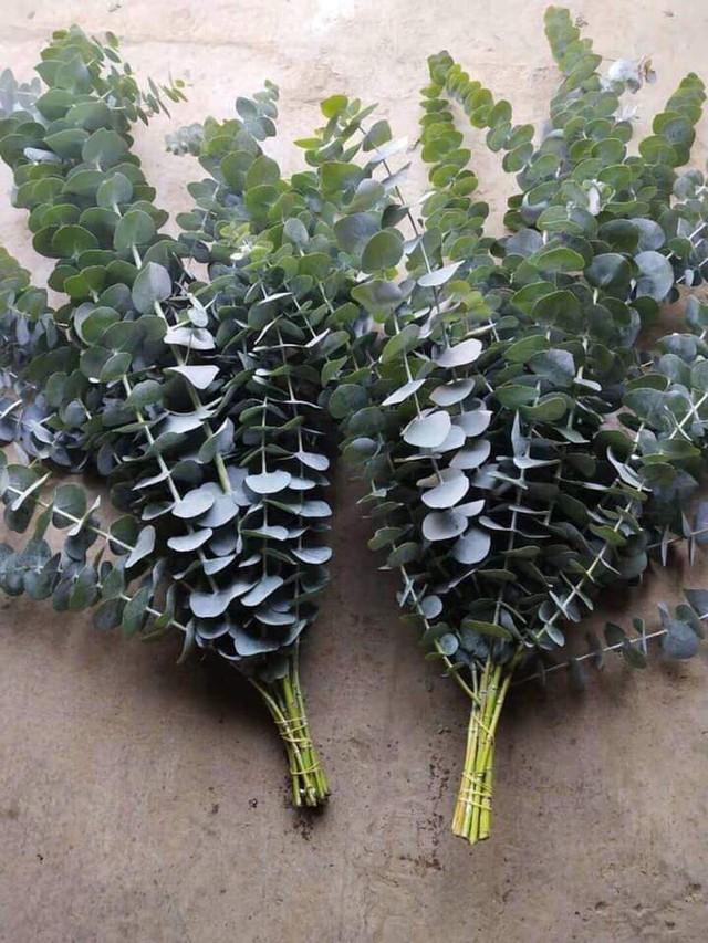 Nông dân Đà Lạt hốt bạc nhờ trồng cây đô la - Ảnh 8.