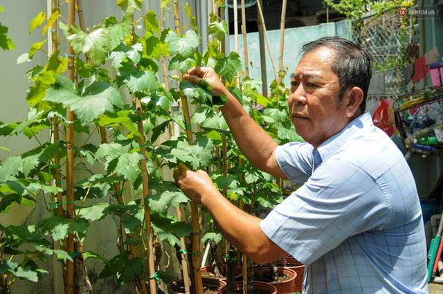 Vườn nho bê tông ở nhà phố Sài Gòn: Trồng chơi lấy bóng mát nhưng cho thu nhập khủng - Ảnh 8.