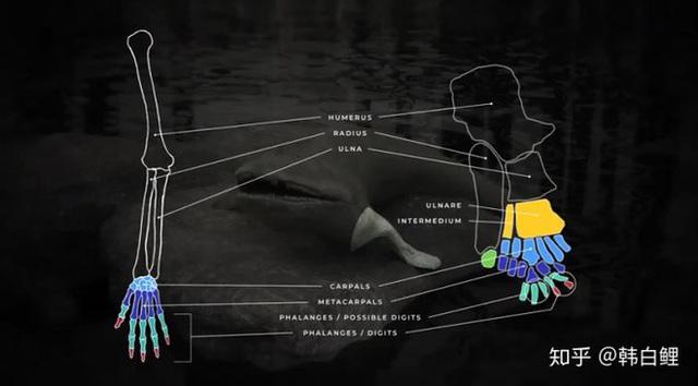 Cá cổ đại tiết lộ bí ẩn về nguồn gốc của ngón tay con người - Ảnh 6.