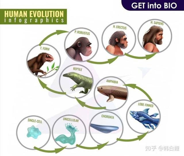 Cá cổ đại tiết lộ bí ẩn về nguồn gốc của ngón tay con người - Ảnh 7.