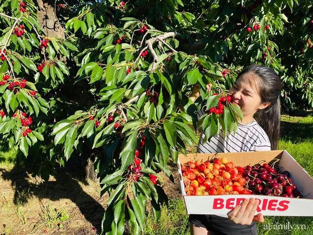 Cặp vợ Việt chồng Mỹ kể lại hành trình tự lái xe đi du lịch khám phá khắp núi rừng nước Mỹ, vào vườn trái cây đẹp như trên phim trong chuỗi ngày tránh dịch Covid-19 - Ảnh 15.