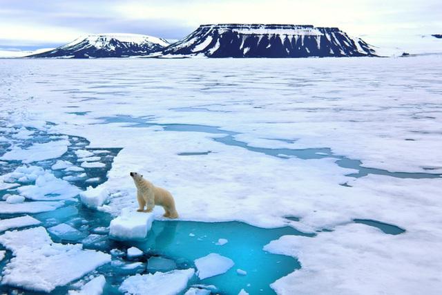 Gấu trắng Bắc Cực sắp biến mất vĩnh viễn khỏi Trái Đất - Ảnh 1.