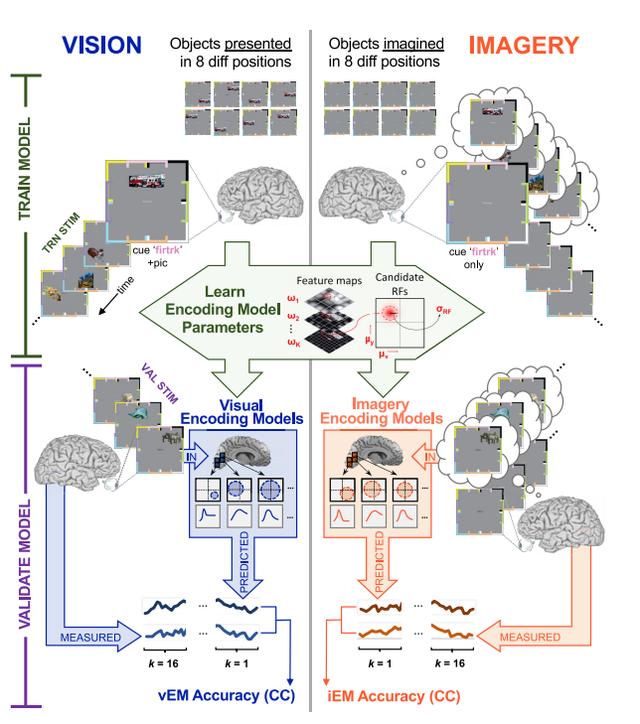 Nghiên cứu tiết lộ tại sao ký ức của chúng ta mờ nhạt dần theo thời gian - Ảnh 11.