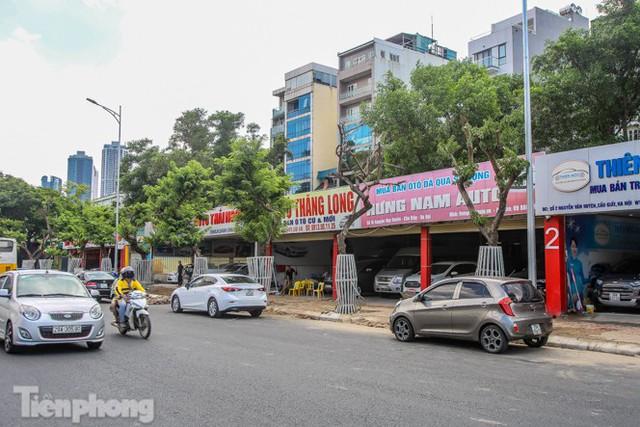 Nhiều cây sưa tiền tỷ trên đường phố Hà Nội dần chết khô trong bọc sắt - Ảnh 11.