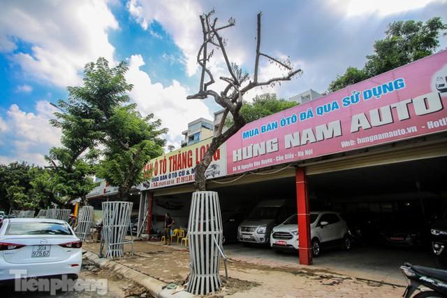 Nhiều cây sưa tiền tỷ trên đường phố Hà Nội dần chết khô trong bọc sắt - Ảnh 3.