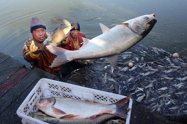 Vì sao sau khi xây xong đập Tam Hiệp, TQ phải thả vào 10.000 con cá? - Ảnh 2.