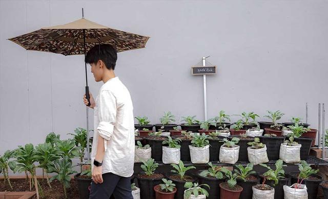 Vườn rau có một không hai với thiết kế ai nhìn lần đầu cũng muốn học tập của cặp đôi trẻ làm thiết kế đồ họa - Ảnh 2.