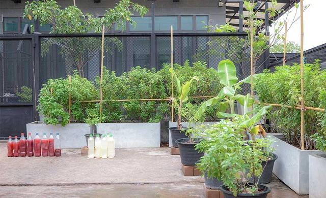 Vườn rau có một không hai với thiết kế ai nhìn lần đầu cũng muốn học tập của cặp đôi trẻ làm thiết kế đồ họa - Ảnh 3.