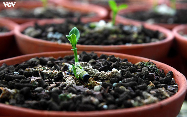 Ảnh: Vườn lan quý hiếm được chăm sóc, bảo vệ hơn cả kho báu - Ảnh 19.