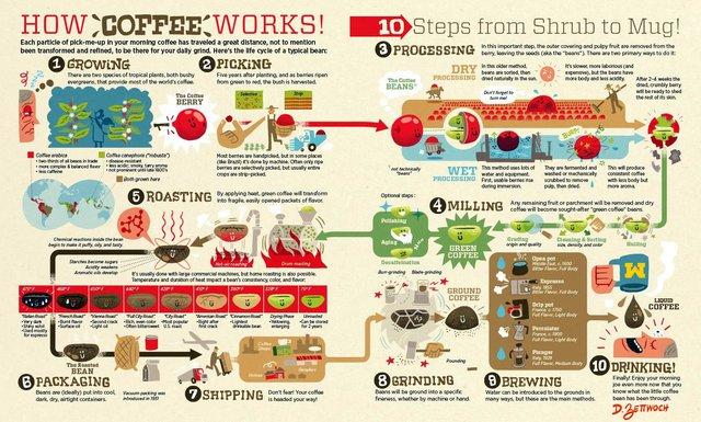 Hành trình của hạt cà phê từ vườn trồng đến tách cà phê thơm lừng mỗi sáng - Ảnh 1.