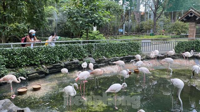 Người dân TPHCM góp hàng tấn rau củ quả cứu đói bầy thú Thảo Cầm Viên mùa dịch COVID-19 - Ảnh 2.