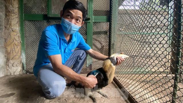 Người dân TPHCM góp hàng tấn rau củ quả cứu đói bầy thú Thảo Cầm Viên mùa dịch COVID-19 - Ảnh 19.