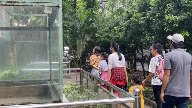 Người dân TPHCM góp hàng tấn rau củ quả cứu đói bầy thú Thảo Cầm Viên mùa dịch COVID-19 - Ảnh 3.