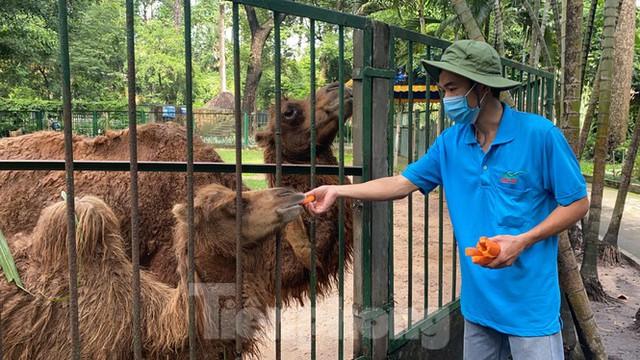 Người dân TPHCM góp hàng tấn rau củ quả cứu đói bầy thú Thảo Cầm Viên mùa dịch COVID-19 - Ảnh 21.