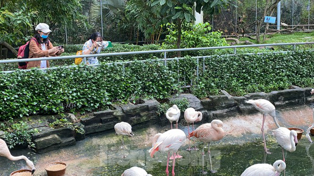 Người dân TPHCM góp hàng tấn rau củ quả cứu đói bầy thú Thảo Cầm Viên mùa dịch COVID-19 - Ảnh 23.
