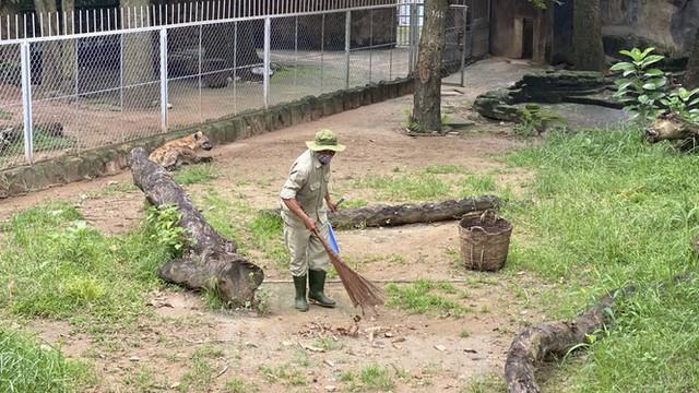 Người dân TPHCM góp hàng tấn rau củ quả cứu đói bầy thú Thảo Cầm Viên mùa dịch COVID-19 - Ảnh 4.