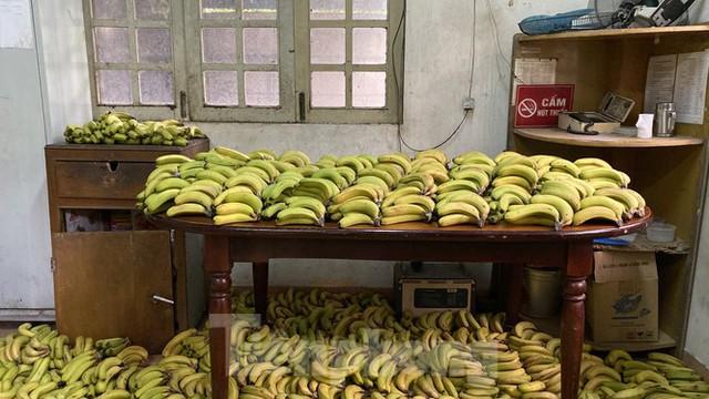 Người dân TPHCM góp hàng tấn rau củ quả cứu đói bầy thú Thảo Cầm Viên mùa dịch COVID-19 - Ảnh 7.