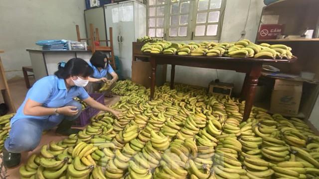Người dân TPHCM góp hàng tấn rau củ quả cứu đói bầy thú Thảo Cầm Viên mùa dịch COVID-19 - Ảnh 8.