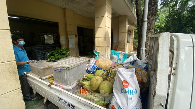 Người dân TPHCM góp hàng tấn rau củ quả cứu đói bầy thú Thảo Cầm Viên mùa dịch COVID-19 - Ảnh 9.