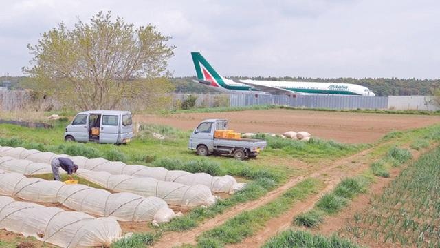 Lão nông từ chối 40 tỷ đồng để trồng rau giữa sân bay quốc tế - Ảnh 3.