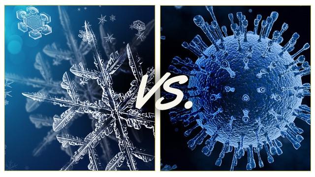 Chuyên gia giải thích: Bạn có thể nhiễm COVID-19 từ thực phẩm đông lạnh hay không? - Ảnh 2.