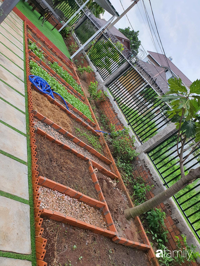 Con gái chi 500 triệu đồng xây nhà vườn container để bố về hưu thỏa mãn đam mê trồng rau ở Sài Gòn - Ảnh 12.