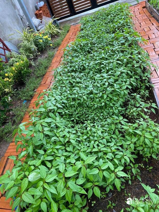 Con gái chi 500 triệu đồng xây nhà vườn container để bố về hưu thỏa mãn đam mê trồng rau ở Sài Gòn - Ảnh 8.