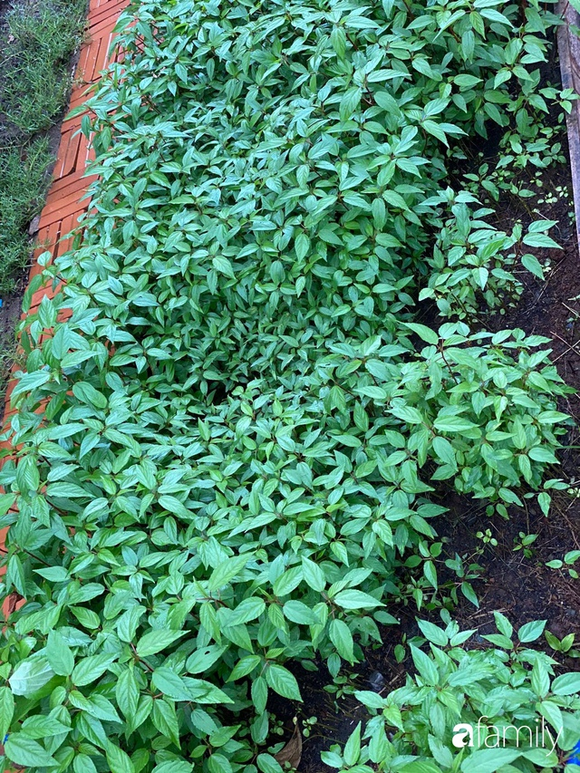 Con gái chi 500 triệu đồng xây nhà vườn container để bố về hưu thỏa mãn đam mê trồng rau ở Sài Gòn - Ảnh 9.