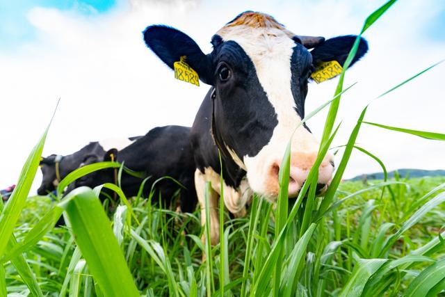 Sau 2 năm tiếp quản trang trại từ Hoàng Anh Gia Lai, NutiFood đã làm gì để xóa đi lời chê bai DN sản xuất sữa nhưng không sở hữu con bò sữa nào? - Ảnh 4.