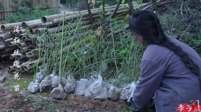 Tiên nữ đồng quê Lý Tử Thất mê hoặc hội chị em bằng vườn hồng như chốn cổ tích kèm công thức chế biến tỷ thứ từ loại hoa này - Ảnh 1.