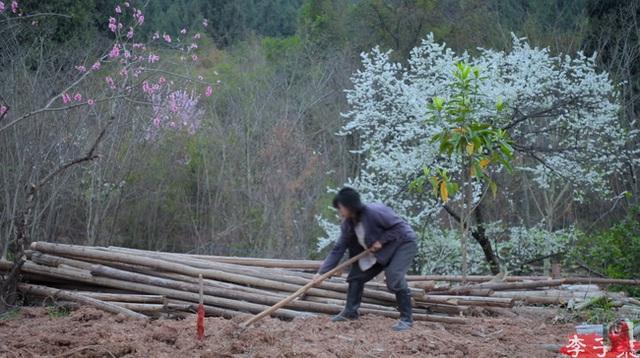 Tiên nữ đồng quê Lý Tử Thất mê hoặc hội chị em bằng vườn hồng như chốn cổ tích kèm công thức chế biến tỷ thứ từ loại hoa này - Ảnh 2.