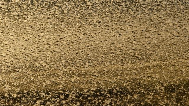 Châu chấu càn quét như vũ bão, nông dân TQ bị ám ảnh cảnh tượng sợ dựng tóc gáy - Ảnh 2.