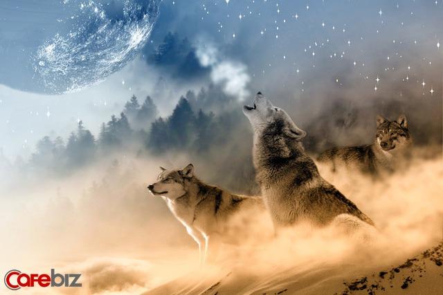 Muốn trở thành kẻ mạnh thực sự, hãy học: Đường đi của SÓI, trí tuệ của CÁO và mưu lược của CHIM ƯNG  - Ảnh 1.