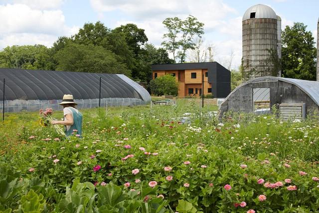 Độc đáo mô hình nhà ở kết hợp từ hai hộ gia đình: Người cho thuê vì đam mê, người khởi nghiệp canh tác thành trang trại hữu cơ vừa đẹp, vừa hiếm có - Ảnh 4.