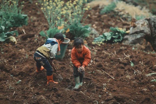 2 bé HMông cặm cụi cuốc đất, gieo hạt phụ bố mẹ và nụ cười khiến bao người tan chảy - Ảnh 11.