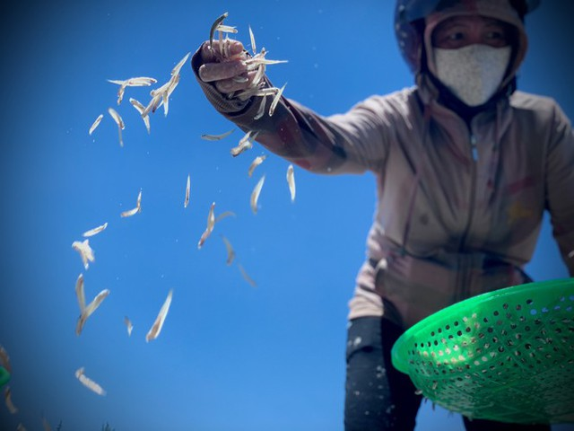 Ngư dân Hà Tĩnh trúng đậm cá cơm, mỗi ngày thu tiền triệu - Ảnh 11.