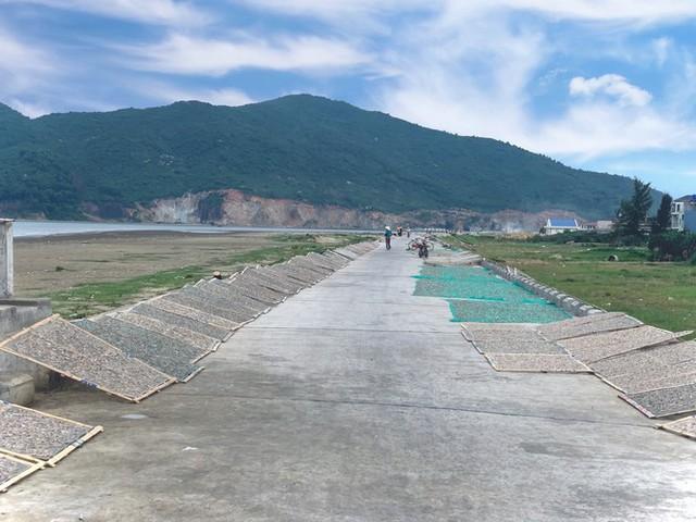 Ngư dân Hà Tĩnh trúng đậm cá cơm, mỗi ngày thu tiền triệu - Ảnh 16.