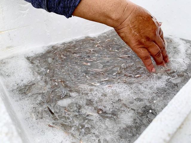 Ngư dân Hà Tĩnh trúng đậm cá cơm, mỗi ngày thu tiền triệu - Ảnh 4.