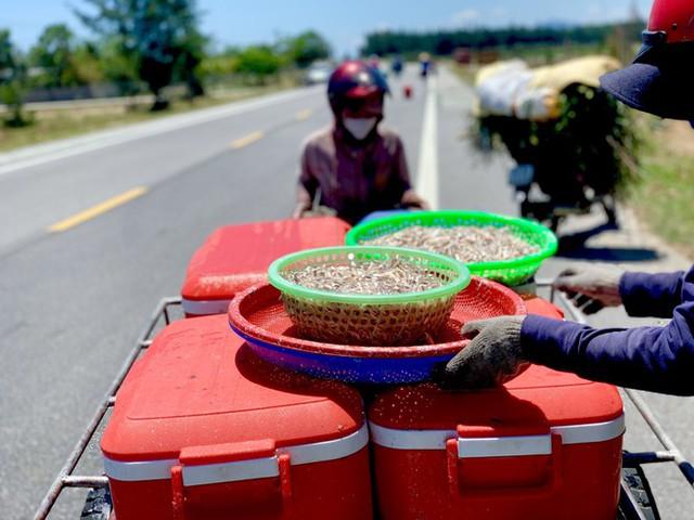 Ngư dân Hà Tĩnh trúng đậm cá cơm, mỗi ngày thu tiền triệu - Ảnh 5.