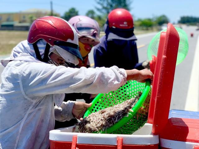 Ngư dân Hà Tĩnh trúng đậm cá cơm, mỗi ngày thu tiền triệu - Ảnh 6.