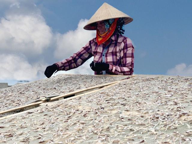 Ngư dân Hà Tĩnh trúng đậm cá cơm, mỗi ngày thu tiền triệu - Ảnh 8.