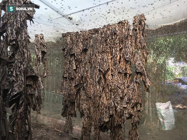 Bỏ nghề kỹ sư, chàng trai đi nuôi ruồi trong rừng: Tôi được làm việc mình thích, kiếm được tiền - Ảnh 2.