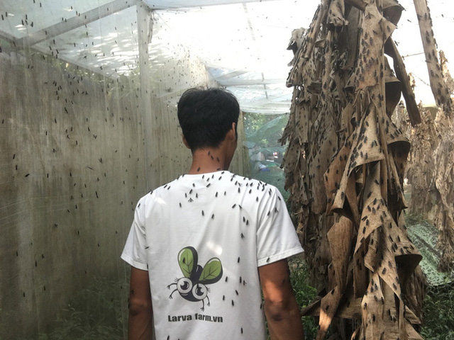 Bỏ nghề kỹ sư, chàng trai đi nuôi ruồi trong rừng: Tôi được làm việc mình thích, kiếm được tiền - Ảnh 7.