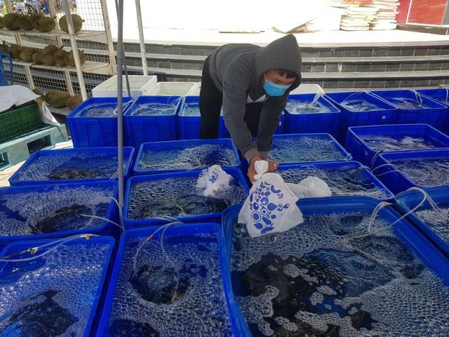 Cả ngàn tấn cá mú bí đầu ra, giá giảm một nửa vẫn khó giải cứu  - Ảnh 1.