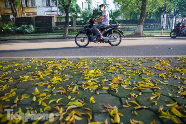 Lá phủ vàng con phố trong tiết trời chuyển sang thu ở Hà Nội - Ảnh 1.