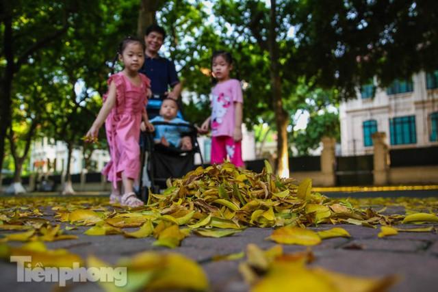 Lá phủ vàng con phố trong tiết trời chuyển sang thu ở Hà Nội - Ảnh 2.